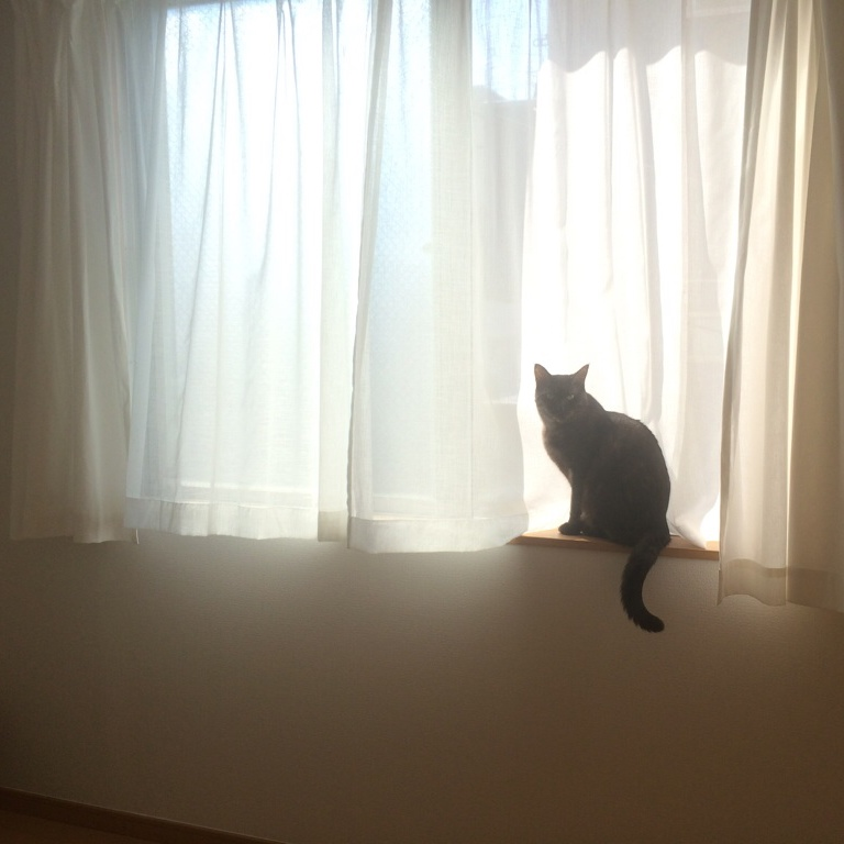 Here She Writes About Scenes Involving Windows Cats And Fashion From Her Experiences With Beloved Cat Sky Trip To Cover The 2017 S Paris